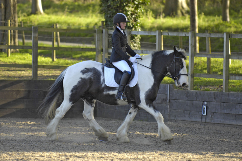 Dressage - Ruby Lamborn riding Bertilicious