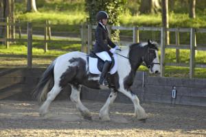 Dressage - Ruby Lamborn riding Bertilicious