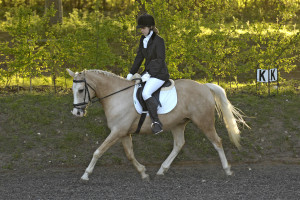 Dressage - Daniella Ward riding Toronto